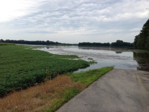 Photo from Sunday, July 19.  This is  what a 21+foot river looks like on our Grubb Triangle field.