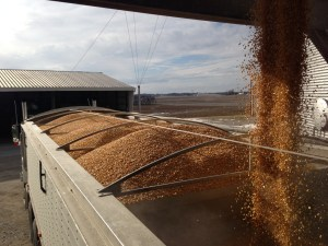 """The """"Pete"""" is being loaded with corn bound for GPC."""