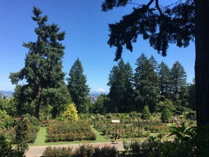 From Washington Park, you look down upon the International Rose Garden, across the city of Portland, with Mt. Hood in the distance.