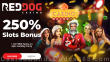 Red Dog Casino Holiday Season 250% Match plus 40 FREE Spins on RTG Epic Holiday Party Special Welcome Deal