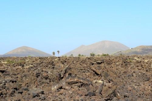 Malpais mit Palmen Lanzarote