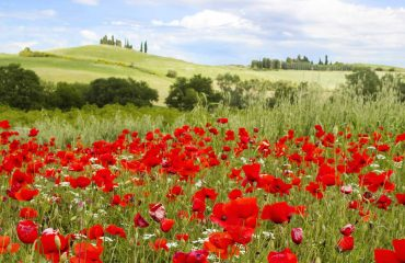 Tuscany-Cortona-Umbria-Assisi-small-group-tour-Private-Groups-Hiking-Tours-Caspin-Journeys