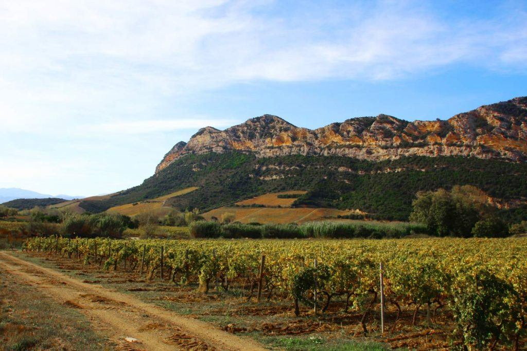 Corsica wine tour with Caspin Journeys