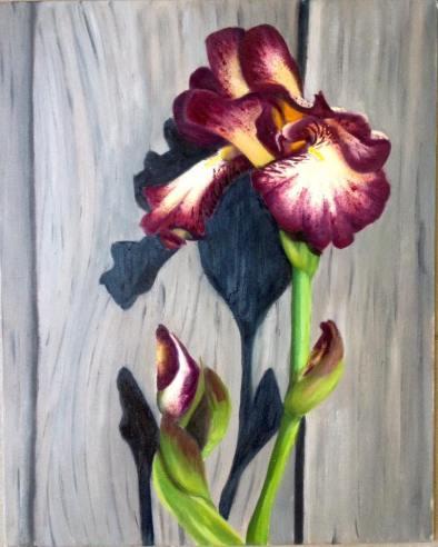 Iris oil paint on canvas board 40x50cm