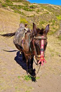 Snazzy Donkey