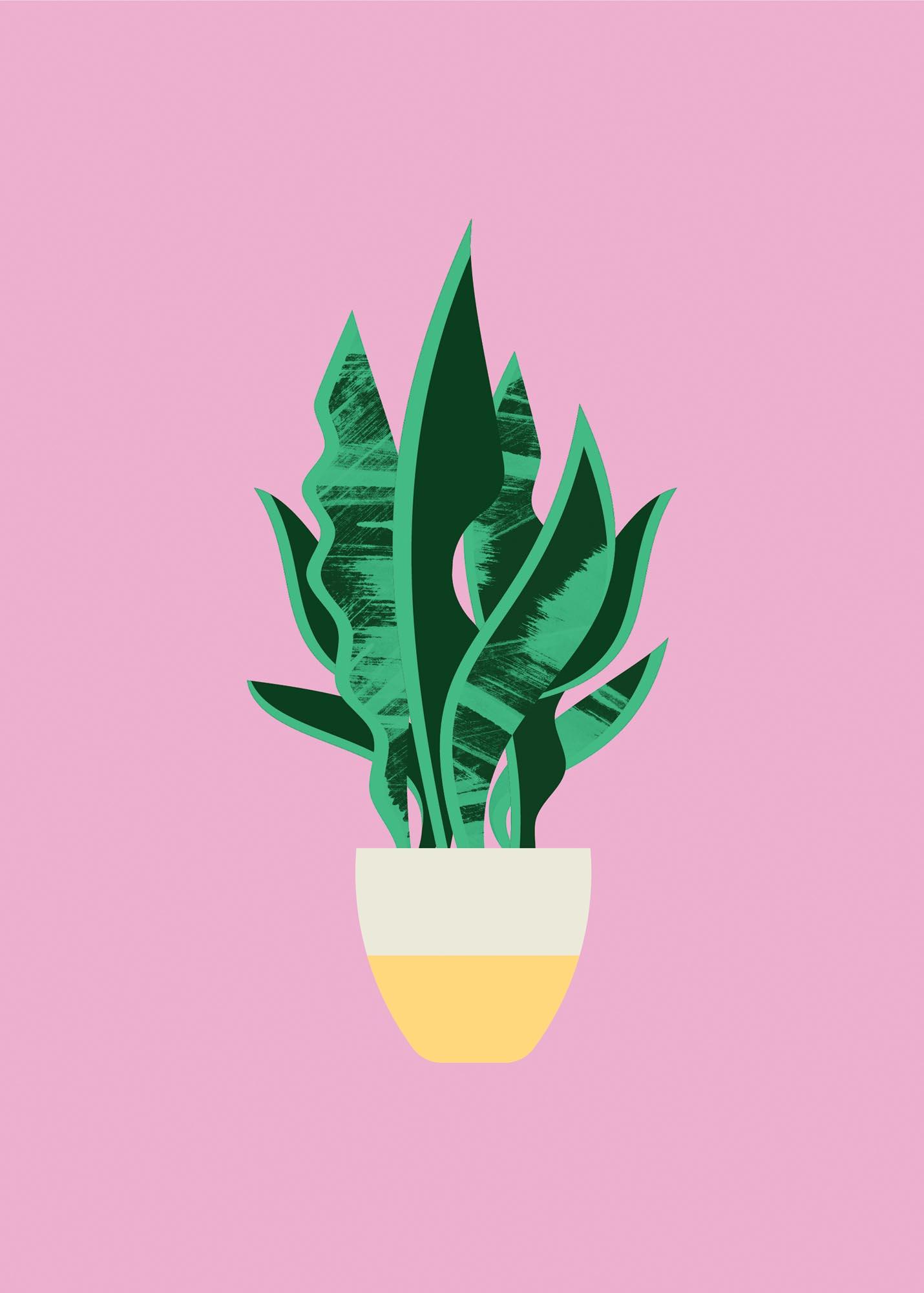 Plant Sit — Snake Plant