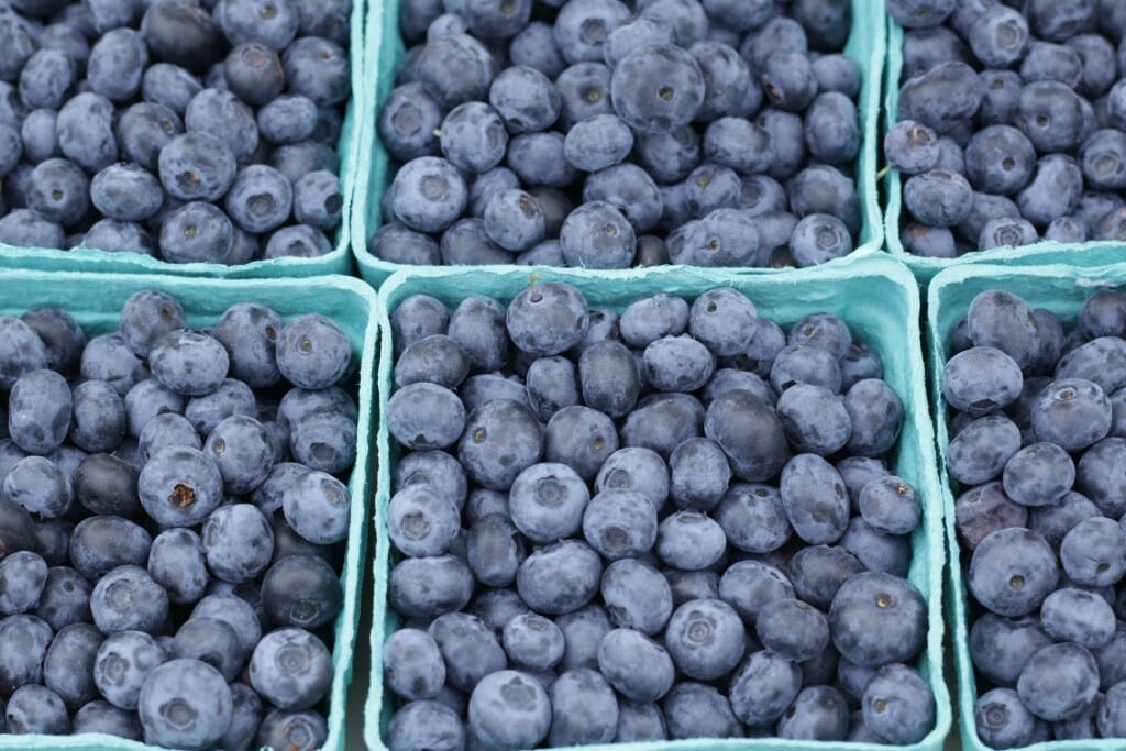 blueberries at swap