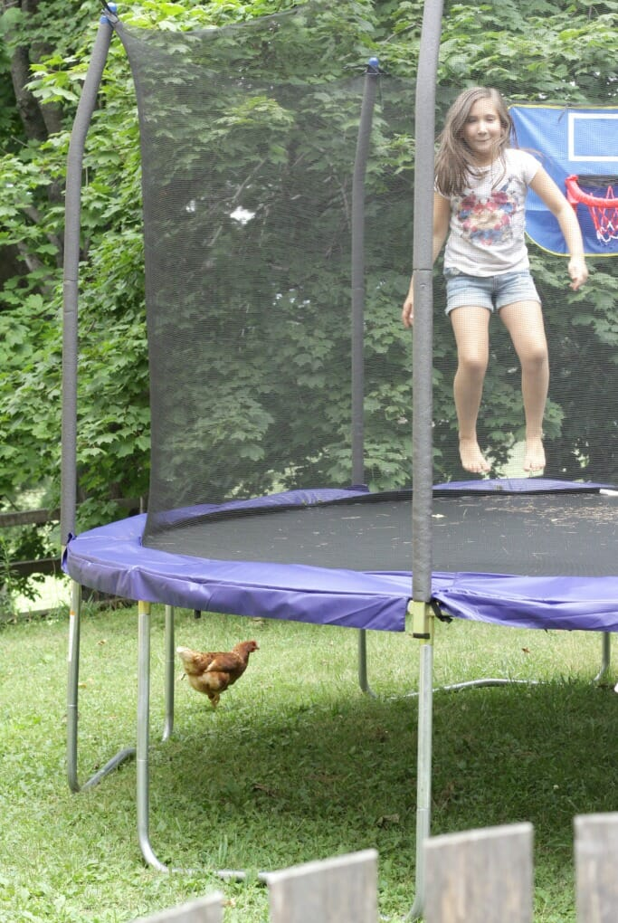 Emmy on the trampoline, chicken under it