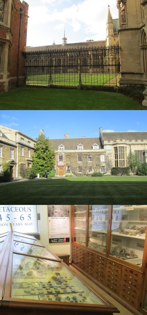 cambridge sedgwick museum kings college