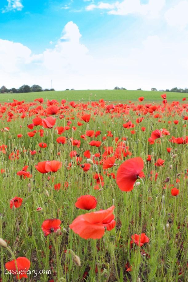 70th anniversary of D Day 2014 poppy field-1