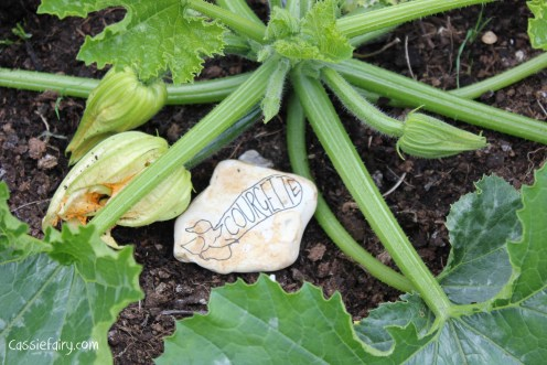 DIY plant markers for growing courgettes