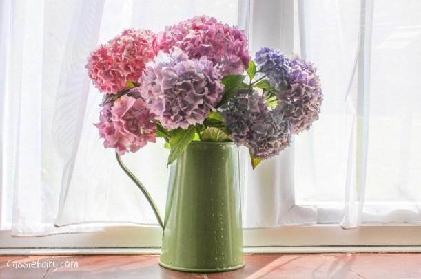Hydrangea flowers-2