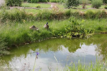 Jimmy Doherty Farm in Suffolk-18
