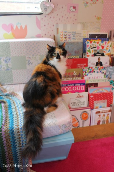 adopting cats-2