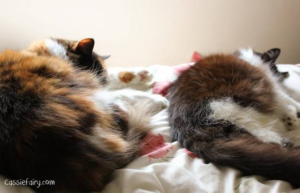 cats cookie and muffin sleeping