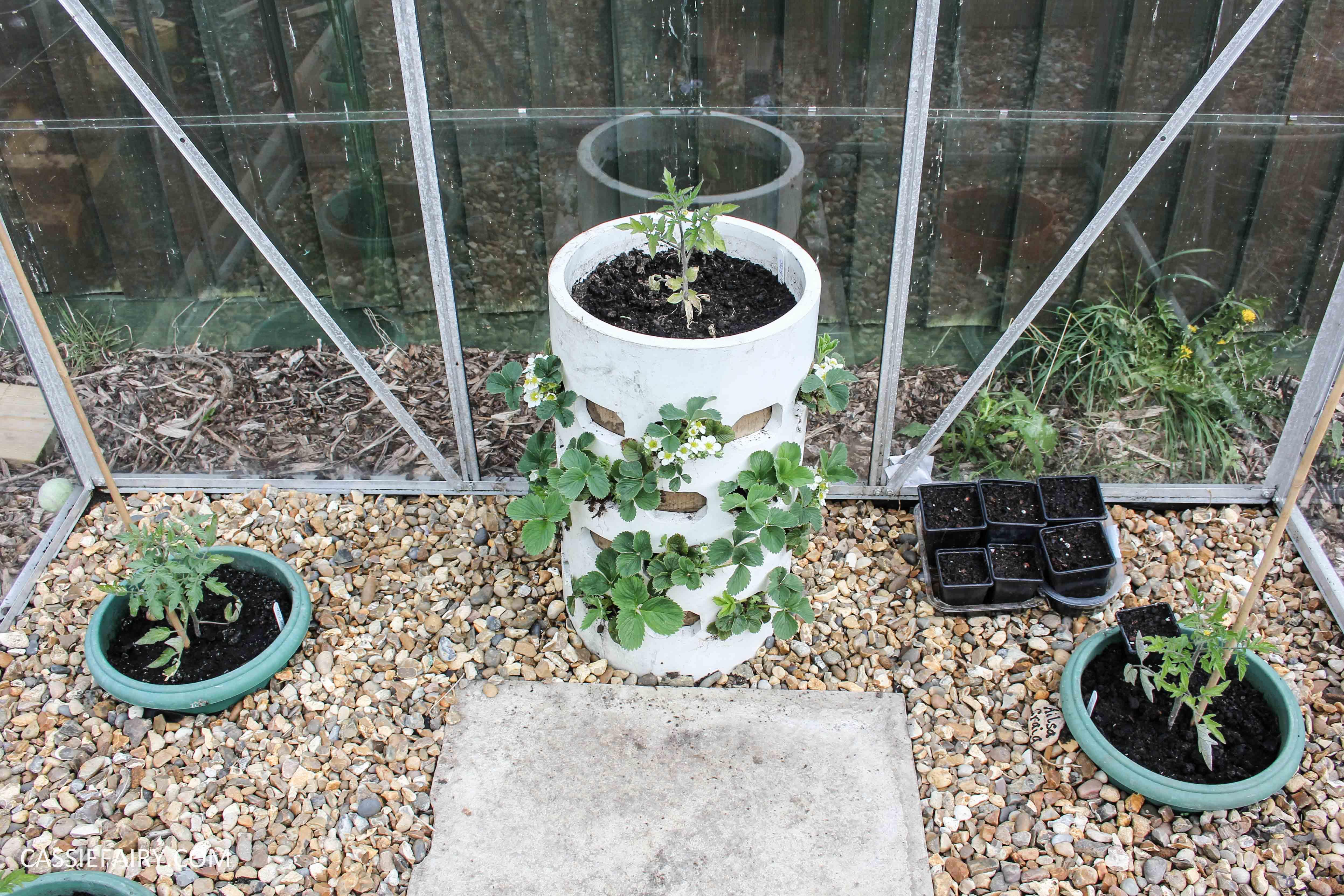 diy homemade strawberry planter greenhouse spring makeover veggie patch