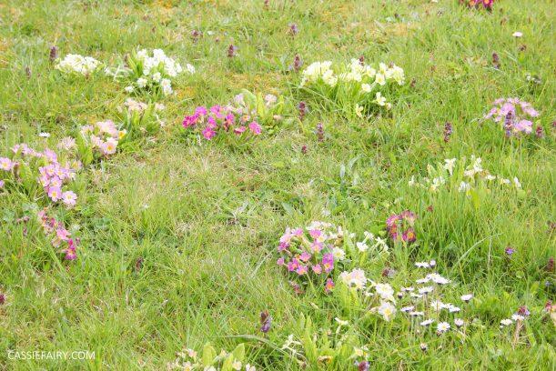 garden spring flowers_-2