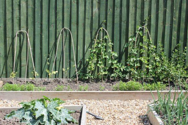 allotment summer garden veggie patch runner beans-3