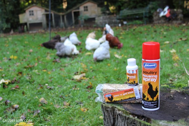 chicken poultry pet health tips products