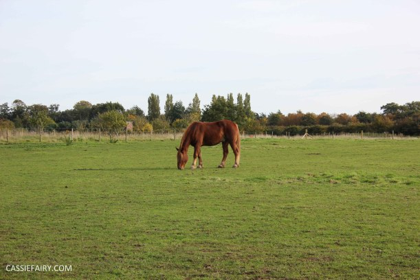 day out at the Suffolk punch trust horse visitor attraction-12