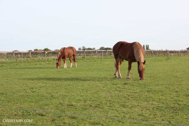 day out at the Suffolk punch trust horse visitor attraction-15