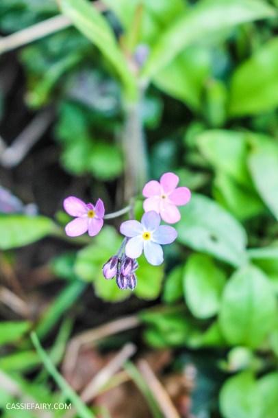 day out wild flower walk spring-27