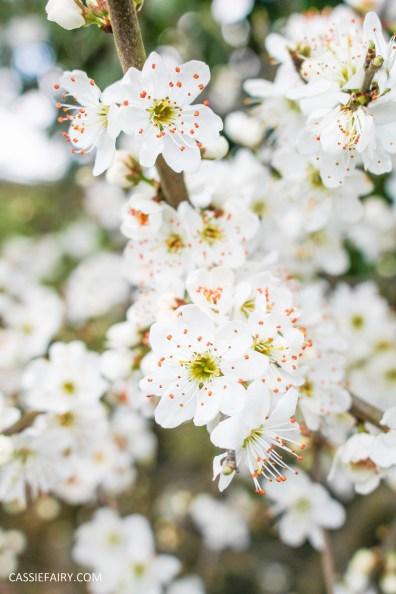 day out wild flower walk spring-7