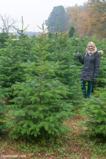 buying local british christmas tree blackthorpe barn suffolk-11