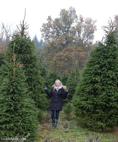 buying local british christmas tree blackthorpe barn suffolk-14