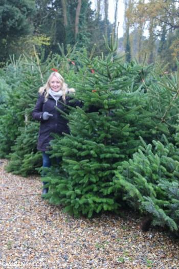 buying local british christmas tree blackthorpe barn suffolk-23