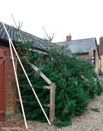 buying local british christmas tree blackthorpe barn suffolk-7