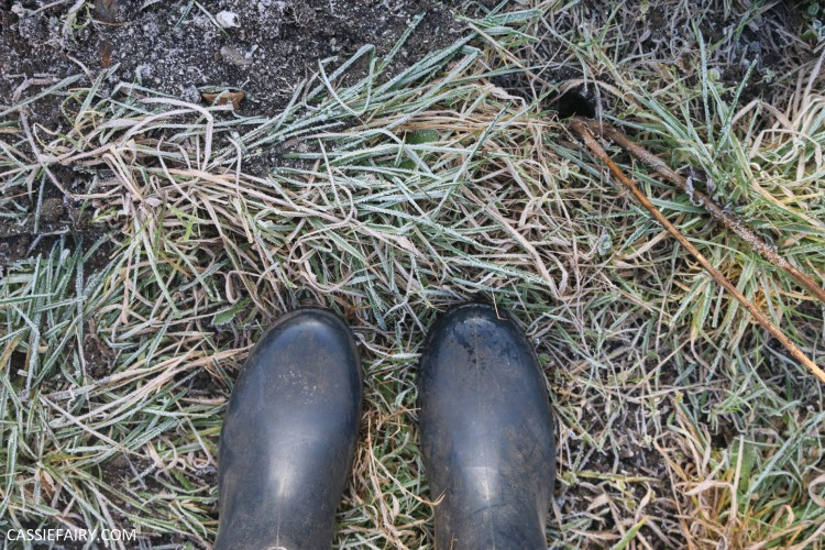 Photo of feet in welly boots on frosty grass