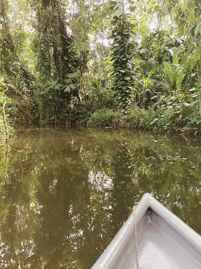 boat in the jungle river