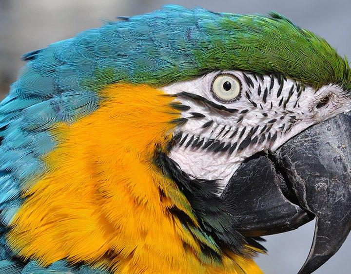 Picinisco – Vende un pappagallo online, ma il bonifico non arriva mai!