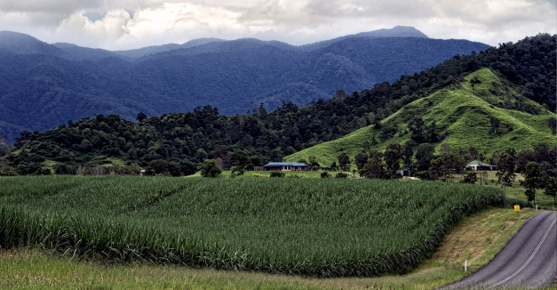 Sugar_Cane_fields_Nth-Qld