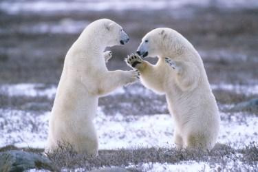 Arctic Rivals 40-1-1