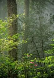 Tree 490-2-6 web