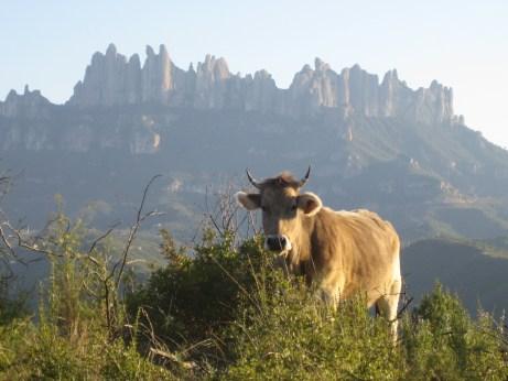 Fotos : Life Montserrat