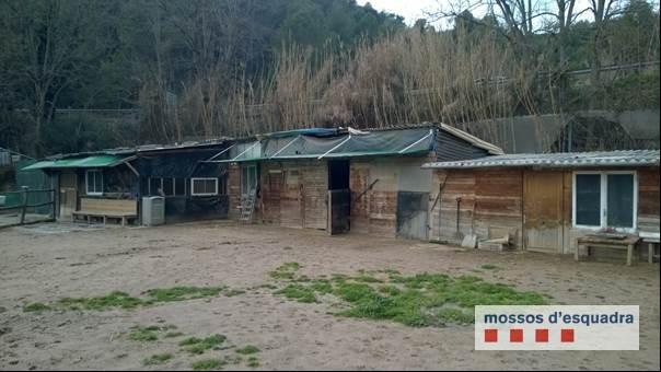 Els mossos detenen una parella veins de Súria per vendre gossos de raça perillosa