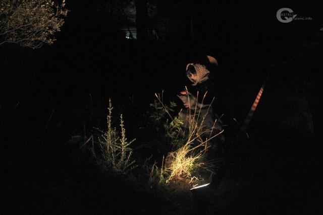 Bosc de la por 2017_7