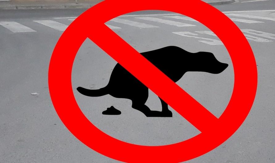 Caques de gos al carrer?? No, gràcies!!!!!
