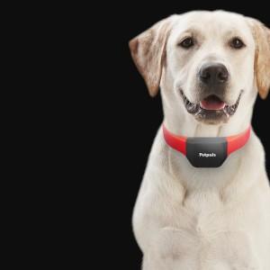 Inventen collaret per a interpretar els lladrucs dels gossos