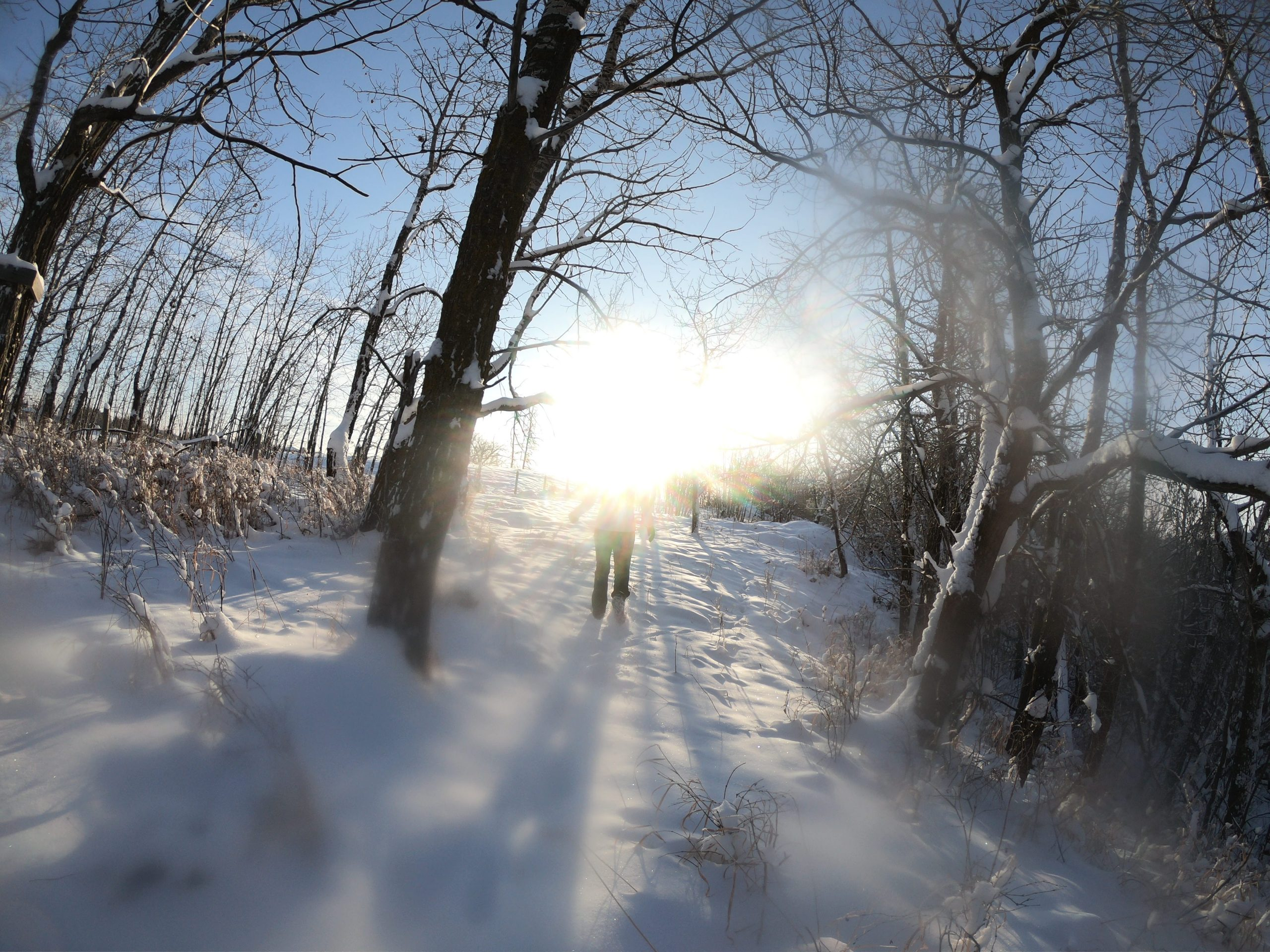 A bright sun blots out the silhouette of someone walking through snow covered trees.