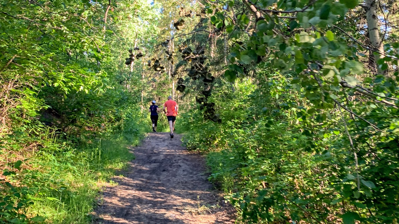 Runners on a trail with thick green foliage.