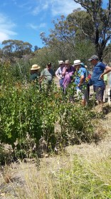 Katie, in straw hat and green top, explaining some of the finer points of espaliering fruit trees.
