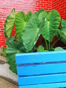 Plant and bench 2016 State Fair