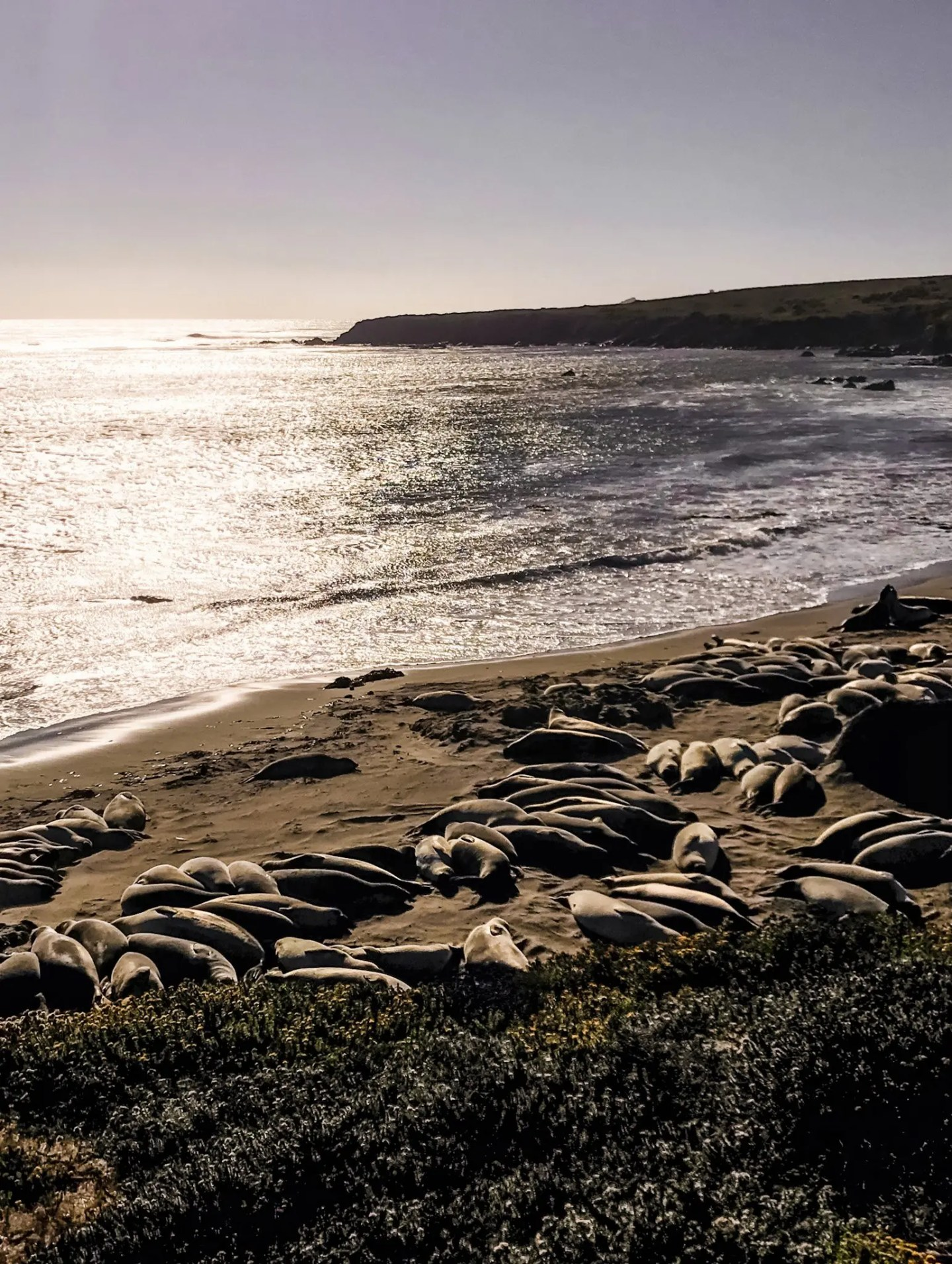 Elephant seals in San Simeone, which we passed as we were heading south from Big Sur towards Pismo Beach.