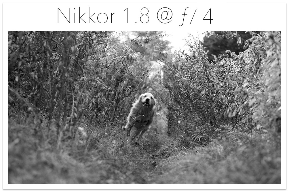 Nikkor 1.8 Test Shot copy