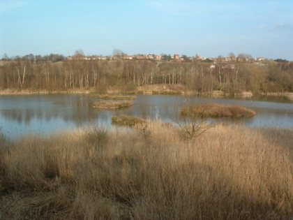Carlton Marsh Nature Reserve, star of one of our Waterways Walks