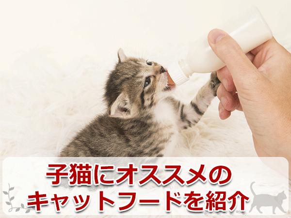子猫にオススメのキャットフードを紹介